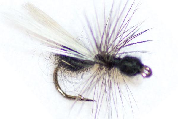 Black Ant Winged