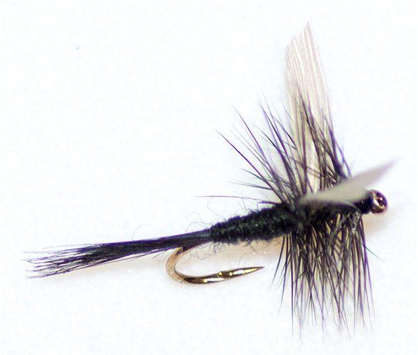Black Gnat Winged