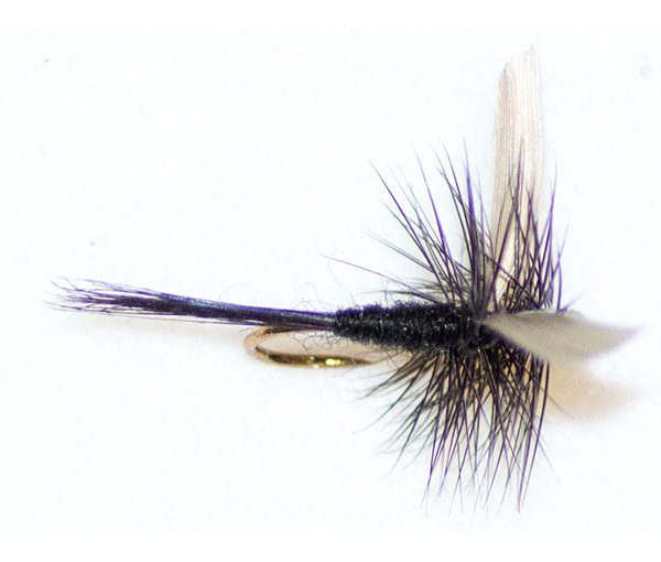 Black Gnat Winged