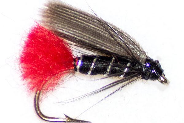 Blae & Black red tail