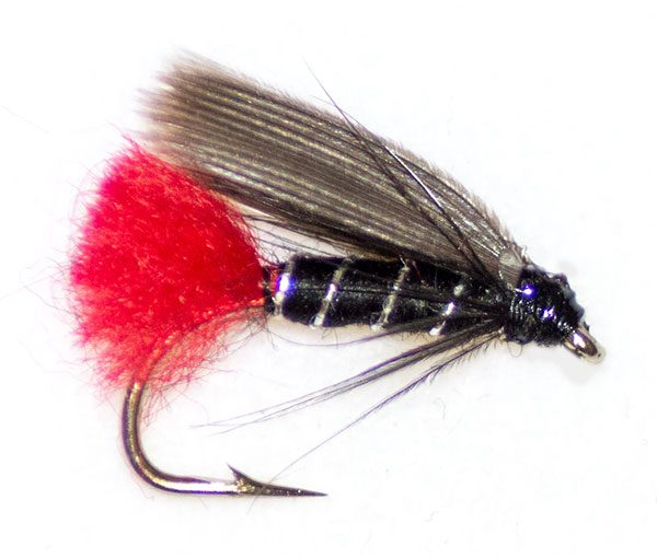 Blae & Black red tail