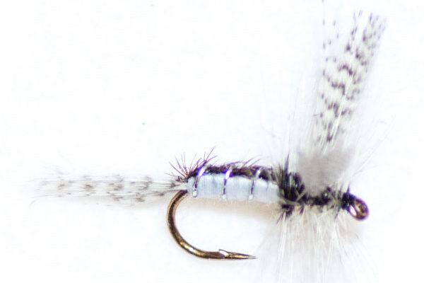 Caenis Spider Winged