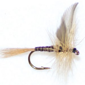 Ginger Quill Winged