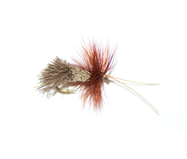 Goddard Caddis Horned Sedge traditional dry fly