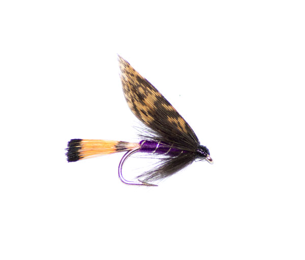 Purple & grouse