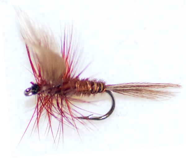 Pheasant Tail Brown Winged