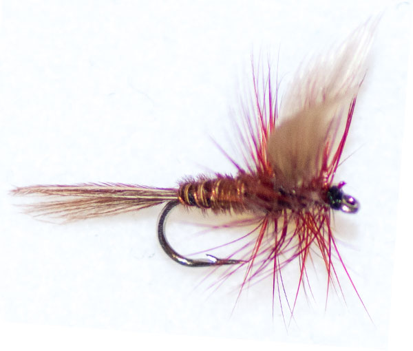 Pheasant Tail Brown Winged
