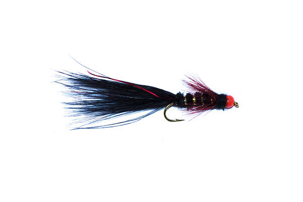 Black and Red Hothead Flash Damsel