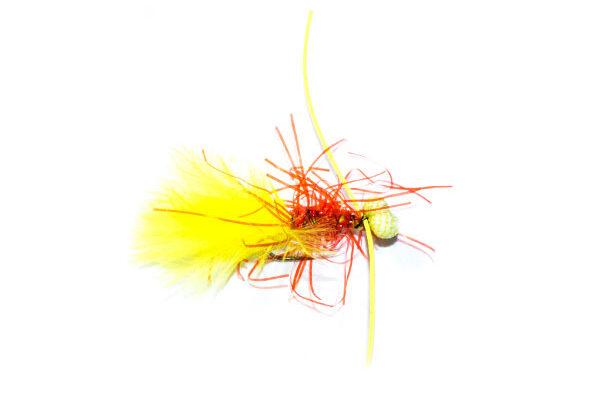 Yellow Booby Damsel