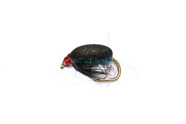 Coch y Bonddu Beetle