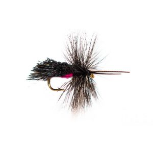Horned Black Goddard Caddis Hot UV Belly Sedge