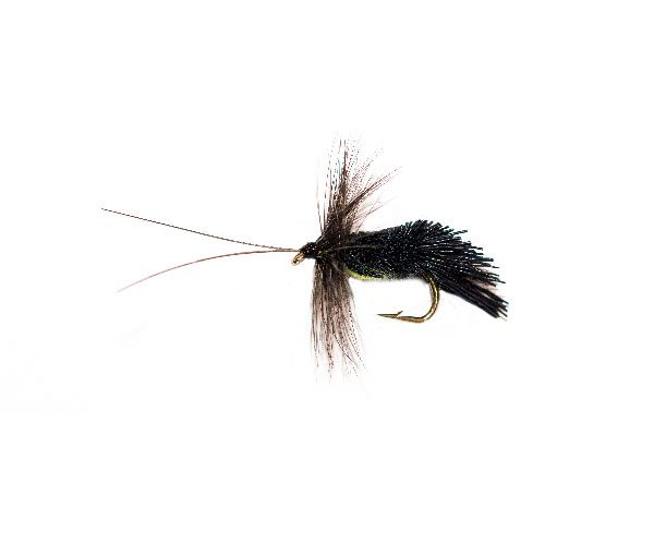 Horned Black Goddard Caddis Yellow Belly Sedge