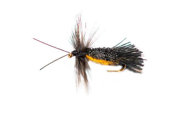Horned Black Goddard Orange Belly Caddis Sedge